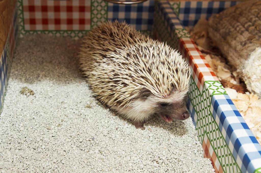 Hedgehog Litter